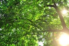 Strålar av solen Arkivfoto