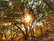 Strålar av solen Royaltyfri Fotografi