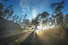 Strålar av solen genom hela träd Arkivfoton