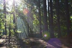 Strålar av solen i skogen Fotografering för Bildbyråer