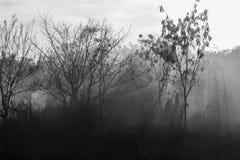 Strålar av solen och rök från en brand Royaltyfria Bilder