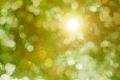Strålar av solen som skiner till och med lövverket Arkivbild