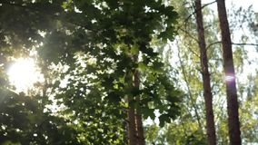 Strålar av solen till och med lövverket, härlig bokeh, bakgrund, abstraktion arkivfilmer