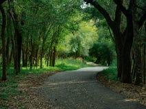 Strålar av solljus som skiner till och med den vibrantly färgrika skogmarkisen royaltyfri fotografi