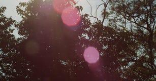 Strålar i träd under soluppgång naturlig härlig liggande Arkivfoton
