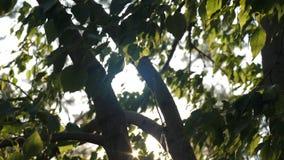 Strålarna av solen kikar ut från trädfilialerna arkivfilmer
