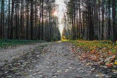 Strålarna av solen som faller på en skogväg royaltyfri fotografi