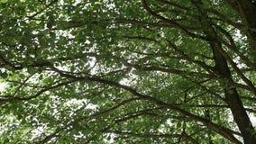Strålarna för sol` s gör deras väg till och med filialerna av träd arkivfilmer