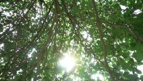 Strålarna för sol` s gör deras väg till och med kronan av äppleträdet, ultrarapid lager videofilmer