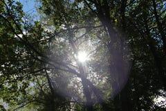 Strålarna för sol` s skiner till och med filialerna Royaltyfria Foton