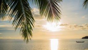 Strålarna för sol` som s passerar till och med gömma i handflatan, förgrena sig Tropiska träd på kustsolnedgångtiden Royaltyfri Foto