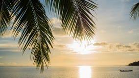 Strålarna för sol` som s passerar till och med gömma i handflatan, förgrena sig Tropiska träd på kustsolnedgångtiden Arkivfoto