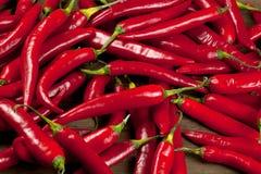 Stråle av peppar för röd chili på svart bakgrund royaltyfri foto