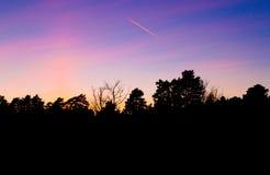 Strålen flyger över skogkontur mot härlig solnedgånghimmel Arkivfoto