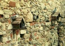 Stróżówki dla gołębi i gołębi Zdjęcie Royalty Free