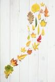 Ström av färgrika höstblad arkivbild