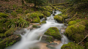 Ström i Blackforest Arkivfoton