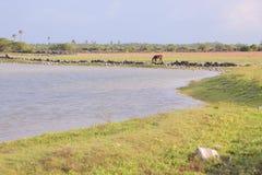 Ström i delftfajansön Arkivfoto