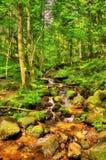 Ström i den Vosgean skogen - Frankrike Royaltyfria Bilder