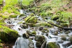 Ström i en bergskog Arkivbilder