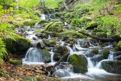 Ström i en bergskog Royaltyfria Foton