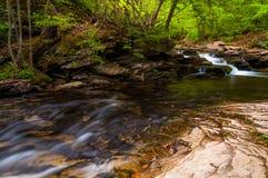 Ström i Ricketts Glen State Park arkivbilder