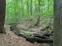 Ström i skog eller trän med trädet med gravyr arkivbild