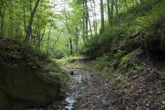 Ström i tät skog Arkivbilder