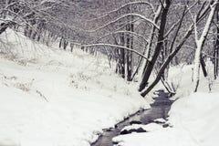 Ström i vinterskog Arkivfoto