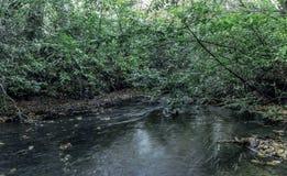 Ström i Virginia Water, Surrey, Förenade kungariket Arkivfoto
