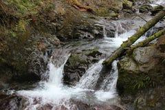 Ström med en liten vattenfall Royaltyfri Bild