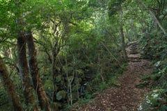 Ström och bana i en frodig och grönskande skog Royaltyfri Foto