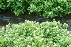 Ström och växter Arkivbilder