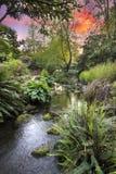 Ström på Crystal Springs Rhododendron Garden Sunset Arkivbild