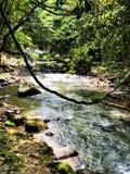 Ström på Khao Sok National Park, Thailand arkivfoton