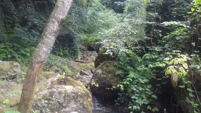 Ström som flödar i skogen royaltyfri foto