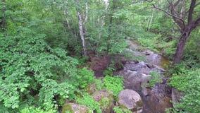 Ström som flödar i skogen bland stenar stock video