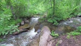 Ström som flödar i skogen bland stenar lager videofilmer