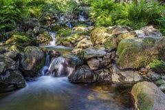 Ström som kör till och med en färgrik skog royaltyfria bilder