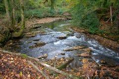 Ström som kör till och med en walesisk skog royaltyfri fotografi