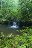 Ström & vattenfall, Greenbrier, Great Smoky Mountains NP Arkivfoto