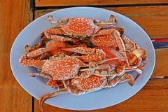 Strömblommakrabba, skaldjur på sjösidan Thailand Arkivbilder