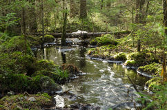 Strömen des Nebenflusses in einem moosigen Wald Stockfotos