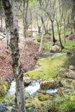 Strömen Sie dass Läufe zwischen Bäumen des Waldes lizenzfreie stockbilder