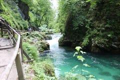 Strömen Sie, die vintgar Schlucht Blejski im Wald, Slowenien durchfließend Stockfotografie