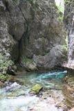 Strömen Sie, die vintgar Schlucht Blejski im Wald, Slowenien durchfließend Stockbild