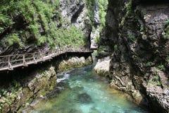 Strömen Sie, die vintgar Schlucht Blejski im Wald, Slowenien durchfließend Stockfotos