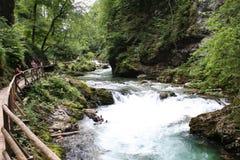 Strömen Sie, die vintgar Schlucht Blejski im Wald, Slowenien durchfließend Lizenzfreie Stockfotografie