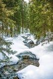 Strömen Sie in einem Wald, Winterzeit, polnische Berge Tatry Lizenzfreies Stockfoto