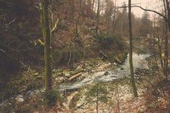 Strömen Sie Flusswasserstrom und fasten Sie unter Wald, in geblutet Stockbilder